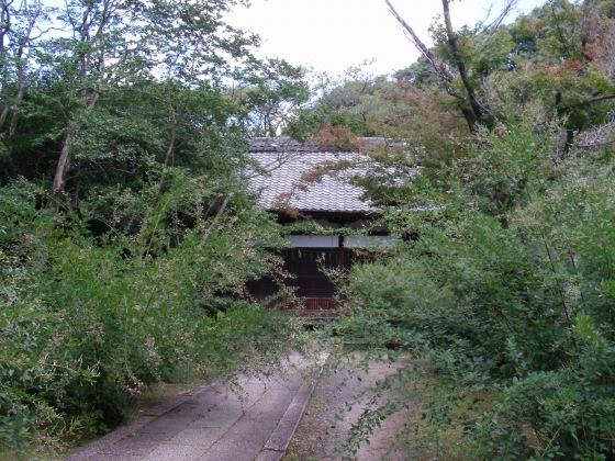 豊国萩、鴨川 041