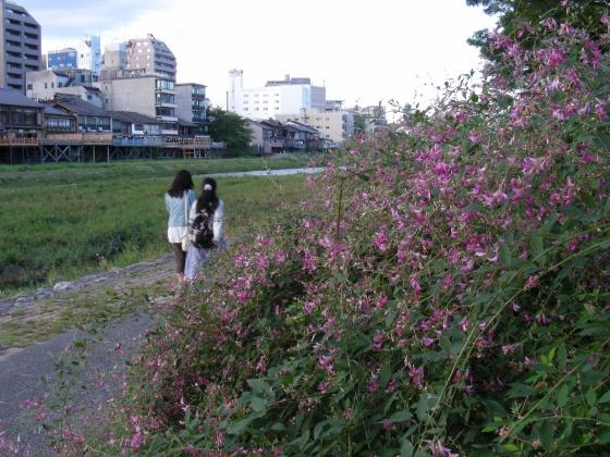 鴨川萩 075