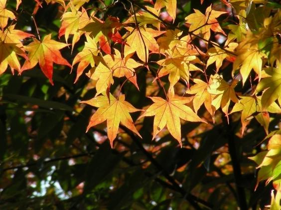 嵐山紅葉2011 090