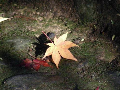 嵐山紅葉2011 082