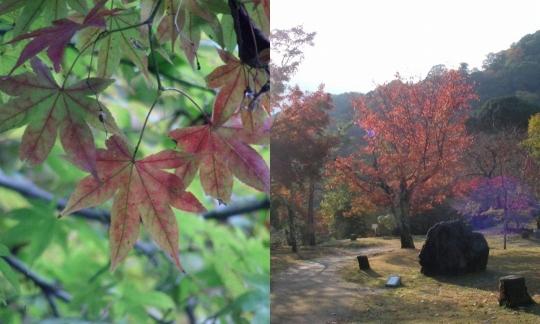 嵐山紅葉21