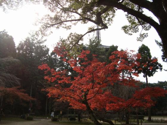 稲荷醍醐紅葉赤 072