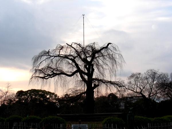 20121月神戸、八坂神社 097 - コピー