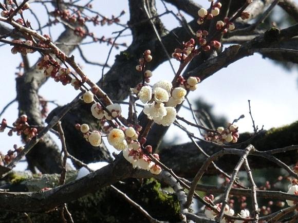 雪銀閣寺浄土寺 052 - コピー