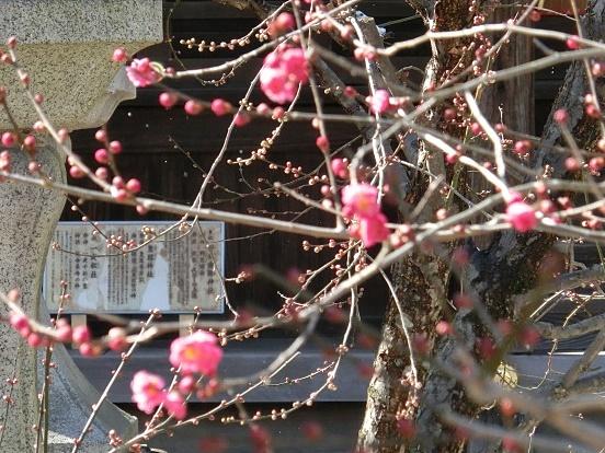 雪銀閣寺浄土寺 059