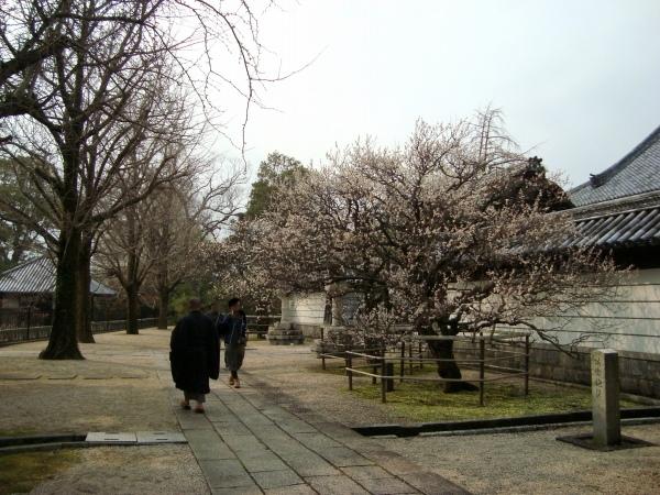 福岡赤 179