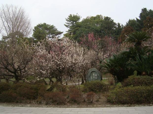 福岡赤 168