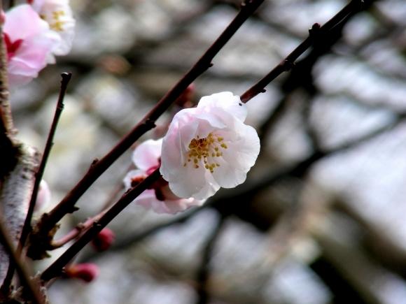 福岡銀 058