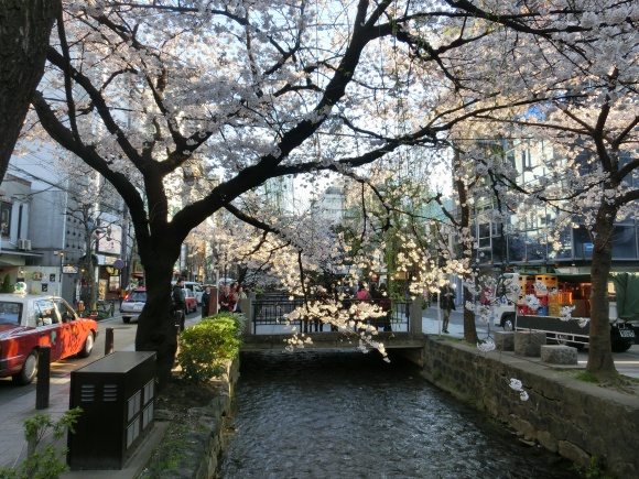 お亀上品高瀬川桜 145 - コピー