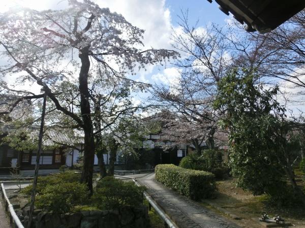 お亀上品高瀬川桜 044