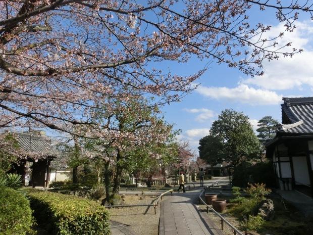 お亀上品高瀬川桜 085 - コピー