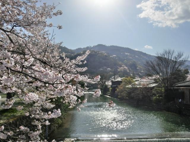 桜嵐山嵐電2012 191 - コピー