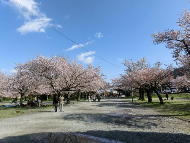 桜嵐山嵐電2012 197 - コピー