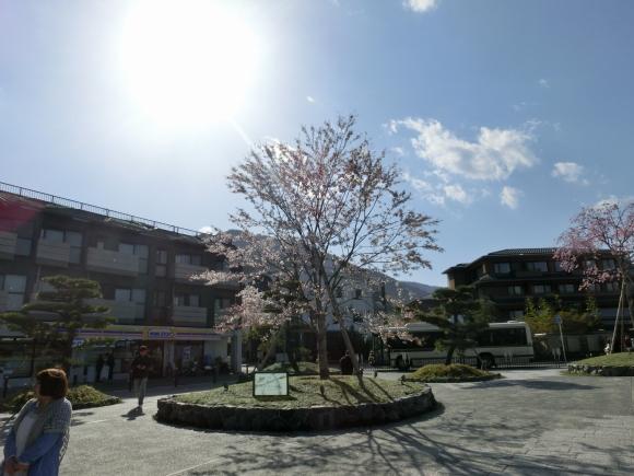 桜嵐山嵐電2012 200