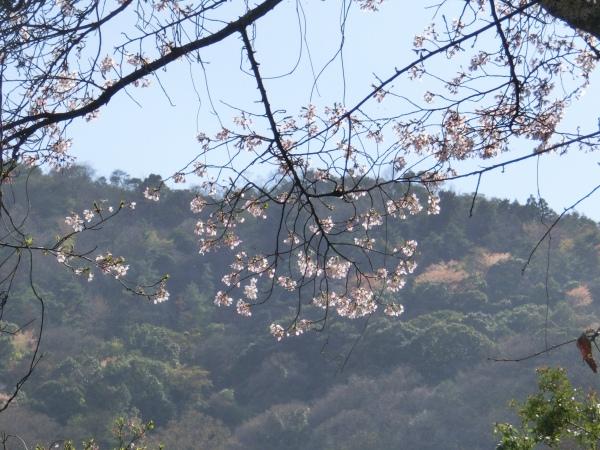 桜嵐山嵐電2012 124 - コピー