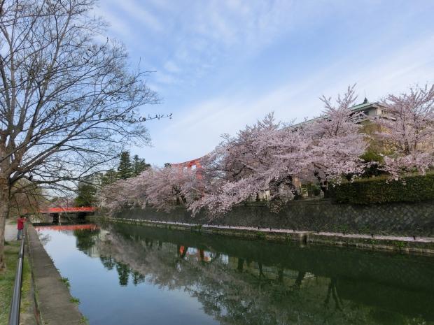 岡崎円山伏見桜2012 042 - コピー