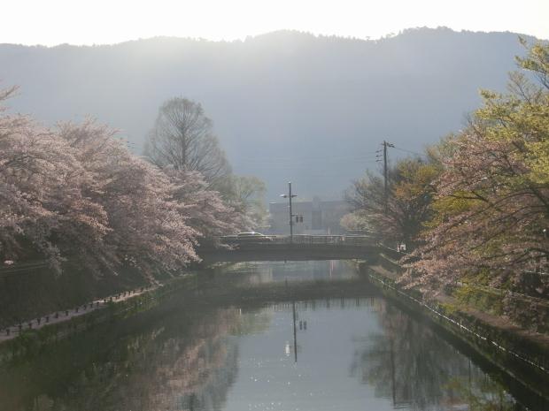 岡崎円山伏見桜2012 020 - コピー