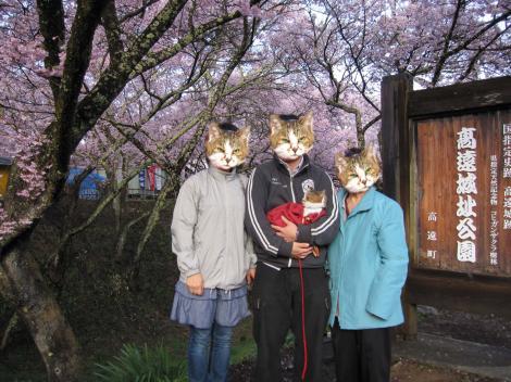 4月13日高遠桜ジェルファミリー