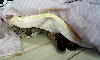 ruru寝