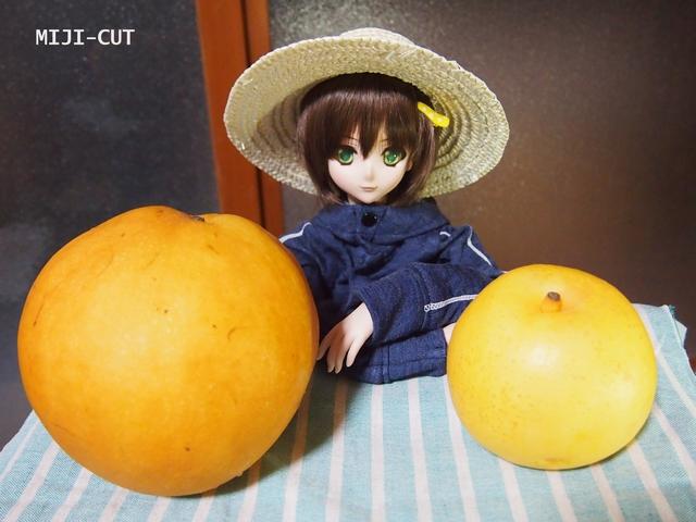 アキラ(強気)と大きな梨