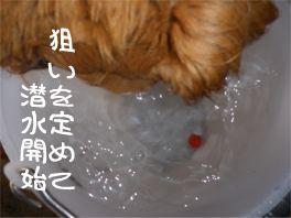 20110804dan2.jpg