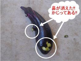 20120723nasu2.jpg