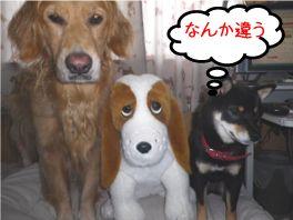 20120813don-dan-kuro1.jpg