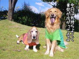 20121009kaiou1.jpg
