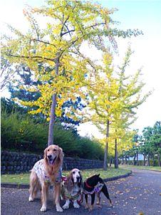 20121031don-dan-kuro.jpg