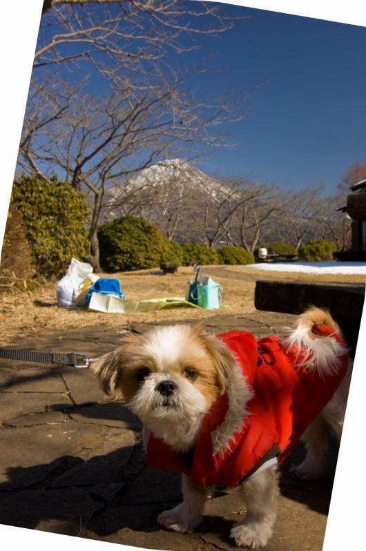 2010 02 07_1654 犬