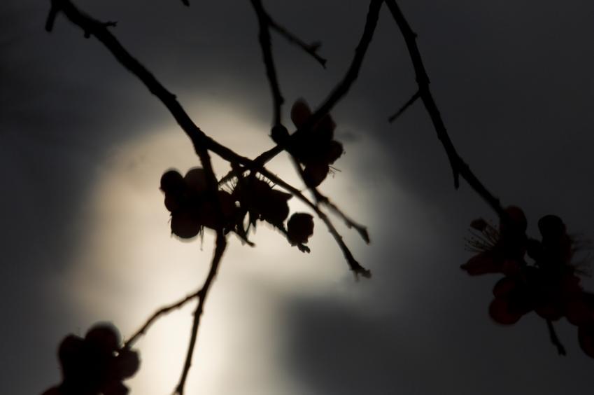 2010 02 21_1898 映り込み