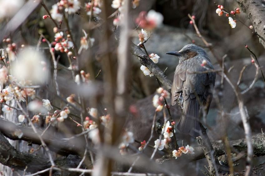 2010 02 21_1894 鳥