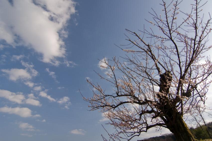 2010 02 28_1982 榛名梅林 D2x (39)+1