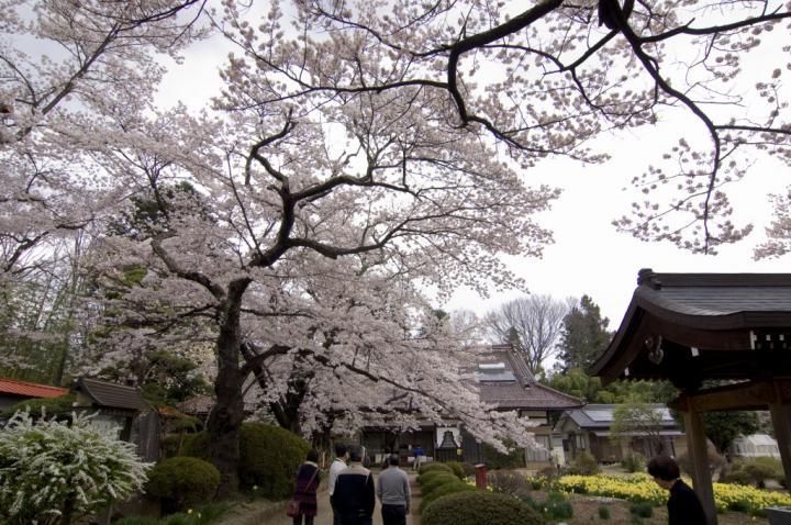 2010 04 11_山梨 桜 D2x (34)