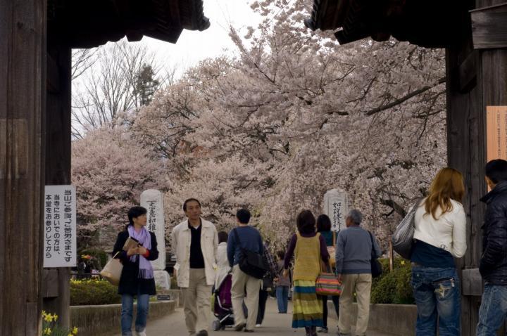 2010 04 11_山梨 桜 D2x (21)