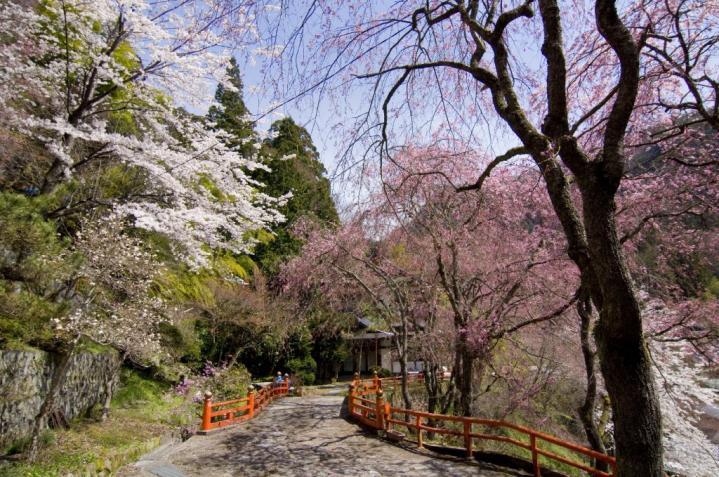 2010 04 18_2468 金桜神社+1