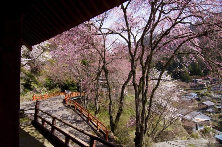 2010 04 18_2467 金桜神社+1