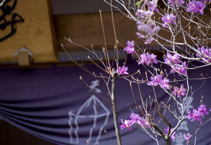 2010 04 18_2490 花