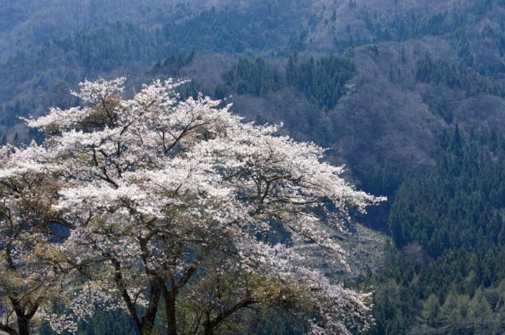 2010 04 25_2525 渋~中之条 (129)