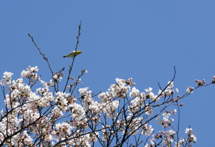 2010 04 25_2525 渋~中之条 (166)