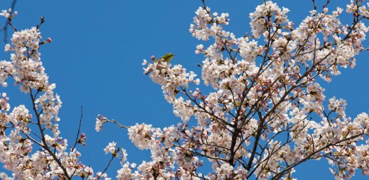 2010 04 25_2525 渋~中之条 (144)