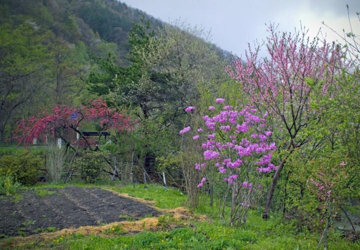 2010 05 12 栃木 山奥の風景 (6)