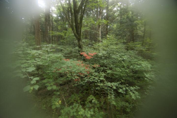 2010 06 13 樹海 (13)天然フィルター
