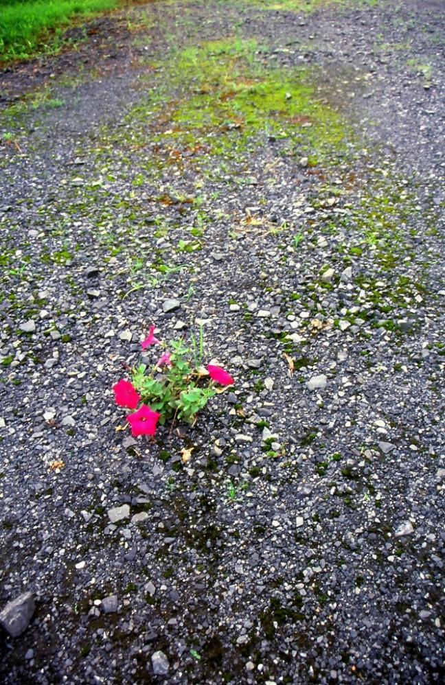 2000 01 01 ポジスキャン 8200f 庭花