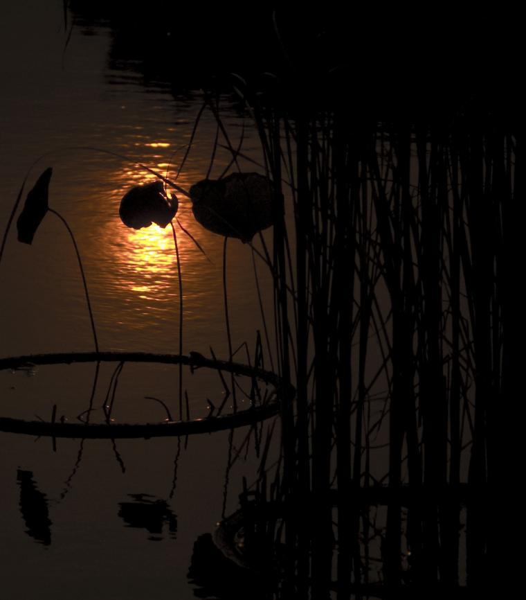夕日の池2