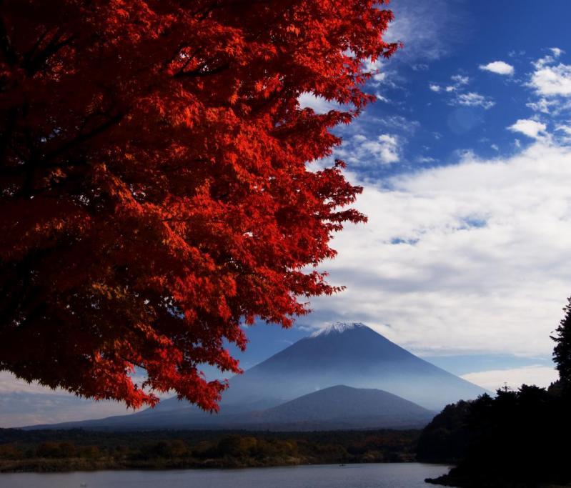 精進湖 紅葉と子抱き富士