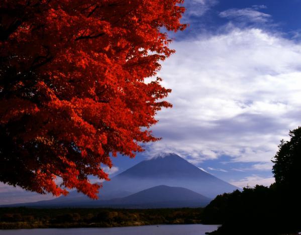 11月7日 精進湖の紅葉 RB67 2