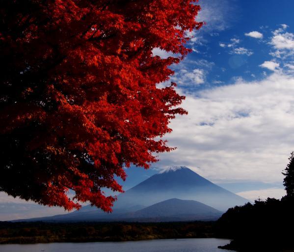 精進湖 紅葉と富士山