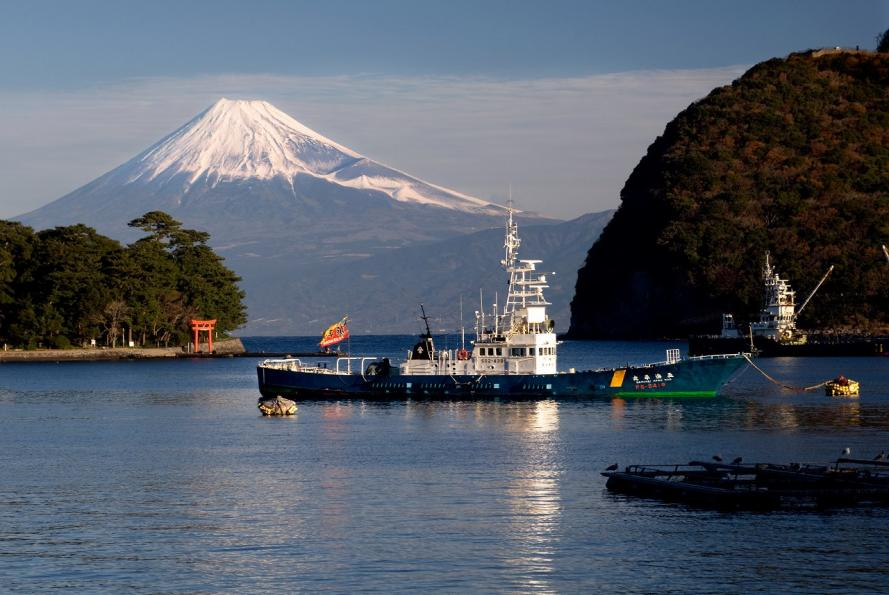 2011 戸田港と富士 (165)