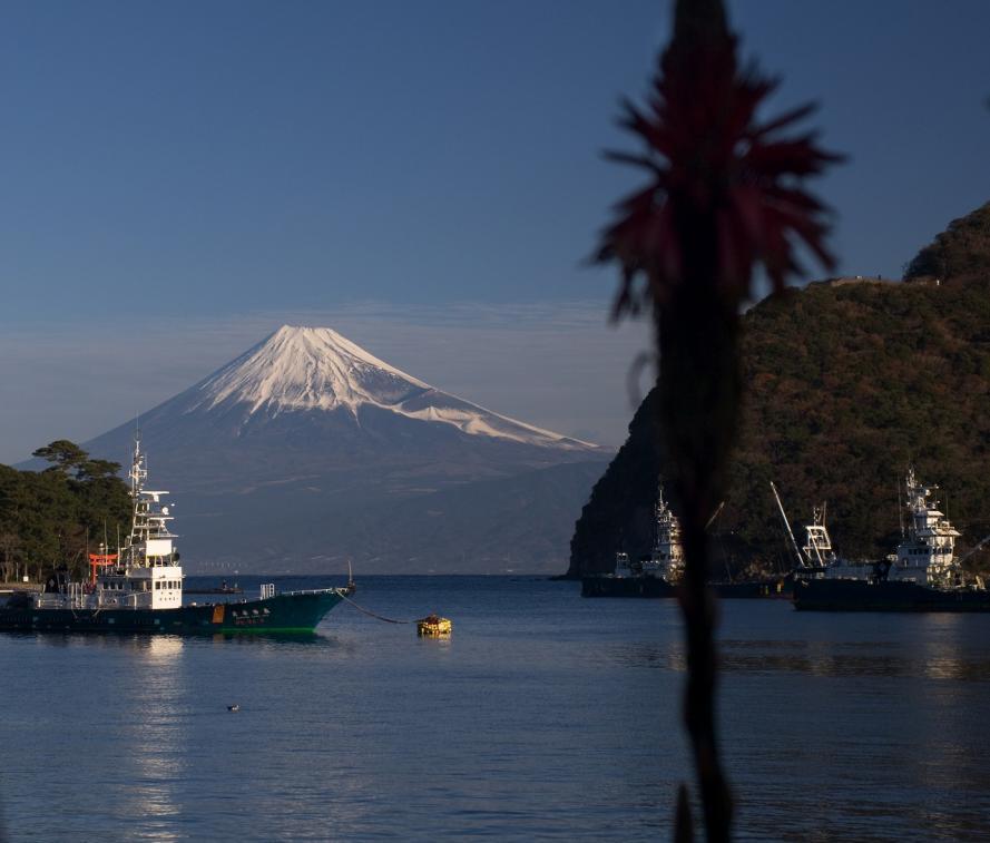 2011 戸田港の朝 (161)